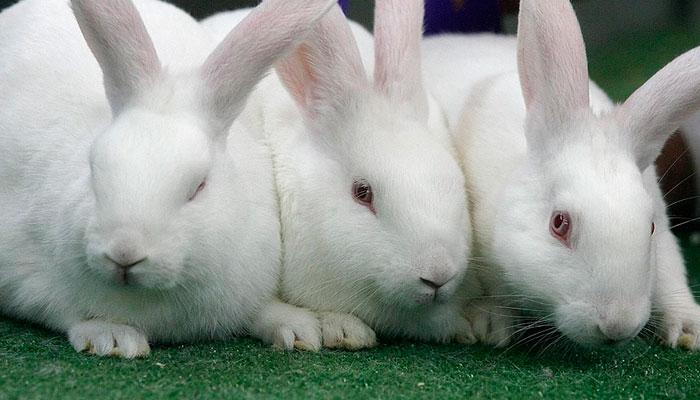 fotos conejos