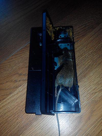 Trampa abierta con el primer ratón