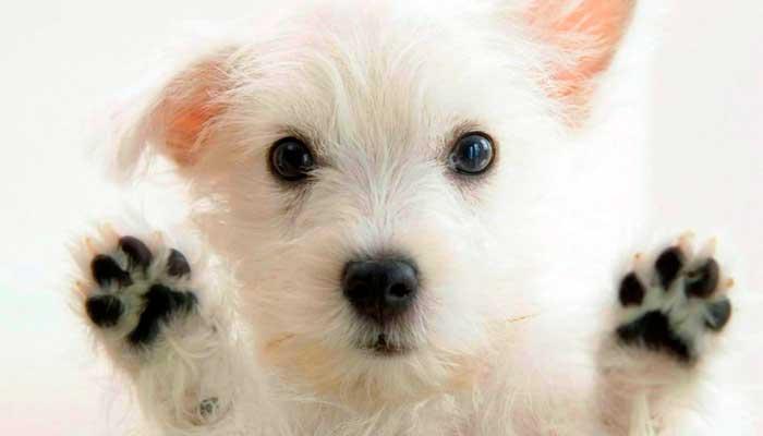 Accesorios para perro imprescindibles